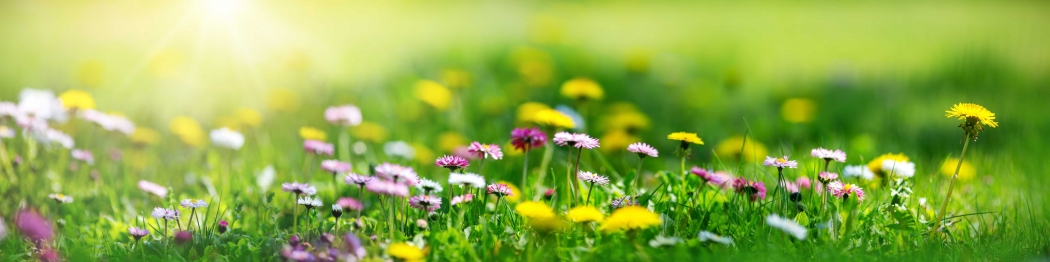 meadow of flowers-9